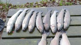 Vissen met Joran 1