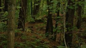 Op pad met de boswachter 1