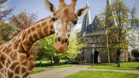 Op safari door Kampen!  1